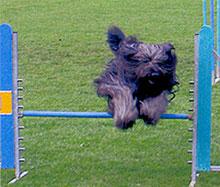Foto von Balu beim Sprung über die Hürde